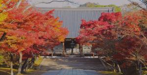 KBS京都TV紅葉生中継